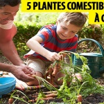 5 plantes comestibles faciles à cultiver