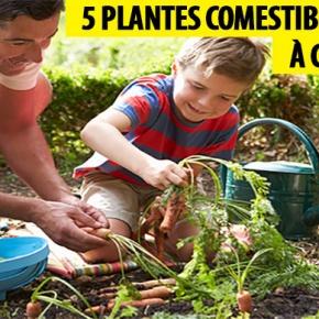 plantes comestibles faciles à cultiver