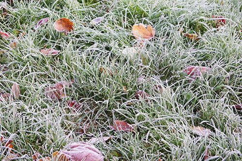 Pelouse-et-feuilles-gelées